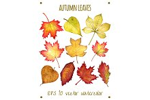 Autumn leaves . Watercolor in vector