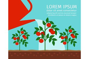 Tomato garden vector illustration