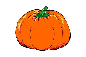 Orange pumpkin vegetable vector