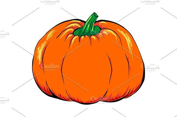 Orange pumpkin vegetable vector
