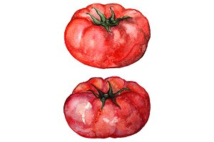 Watercolor tomato vegetable set
