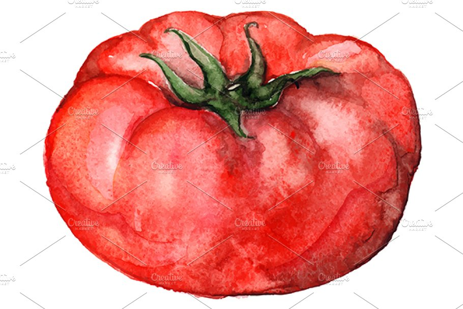 Watercolor tomato vegetable vector