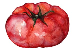 Watercolor tomato vegetable vector
