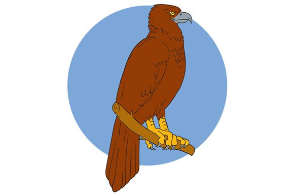 Australian Wedge-tailed Eagle Perch  in Illustrations