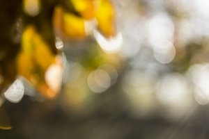 Autumn Bokeh I
