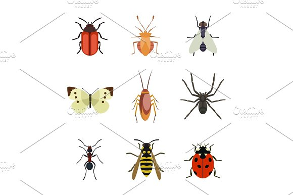 Insect Icon Flat Isolated Nature Flying Butterfly Beetle Ant And Wildlife Spider Grasshopper Or Mosquito Cockroach Animal Biology Graphic Vector Illustration