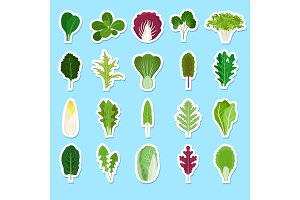 Cartoon green salad leaves stickers