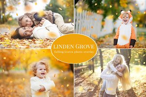 Linden Grove-falling leaves overlay