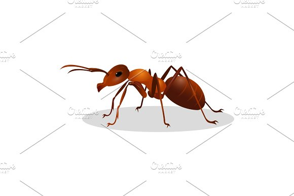 Brown ant isolated on white. Insect icon. Termite.