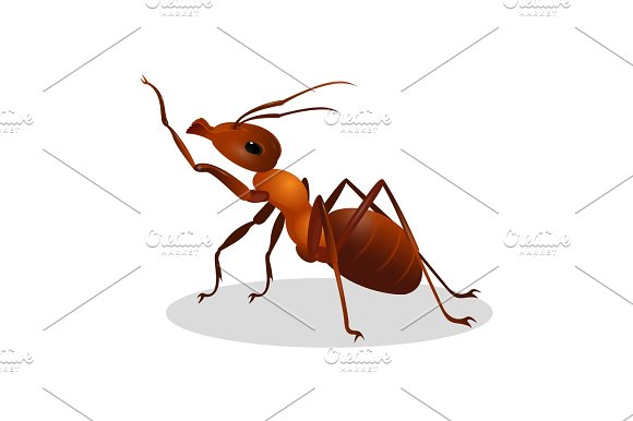 Cartoon realistic ant isolated on white. One leg raised up in Illustrations