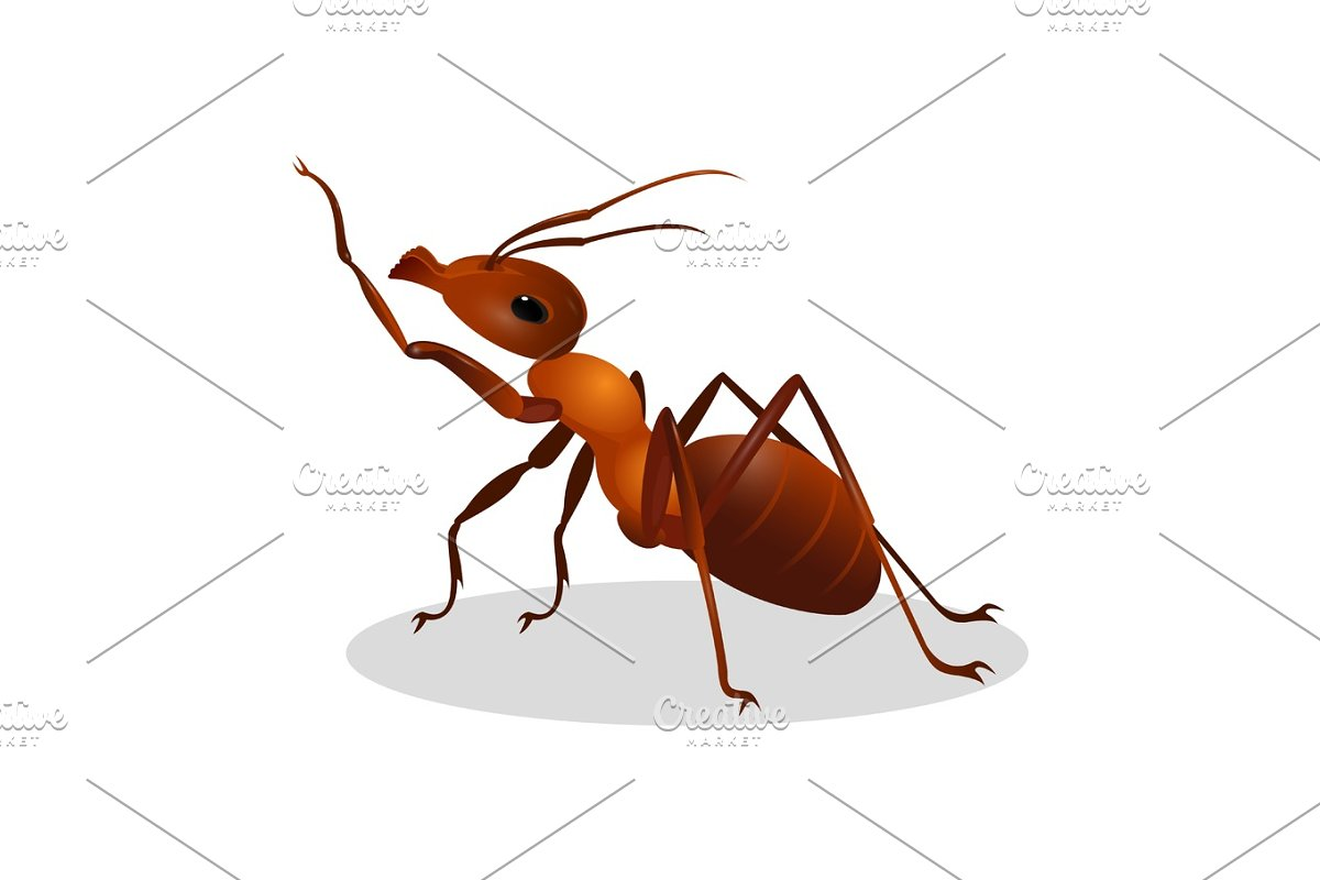 Cartoon realistic ant isolated on white. One leg raised up in Illustrations - product preview 8