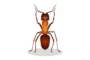 Realistic ant with two legs raised up  hooked clows isolated