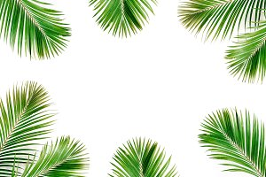 Palm leaves frame