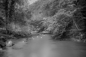 River / Trees / Black & White
