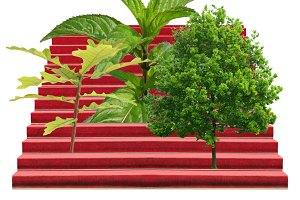 Plants on a stairway isolated over white