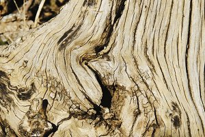 a wooden background root of a tree with deep texture, selective focus