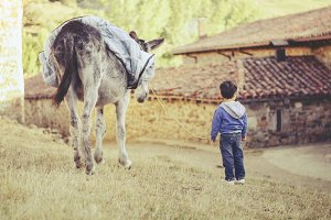 Child with a donkey