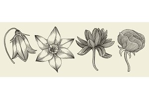 Sketch of wild flowers
