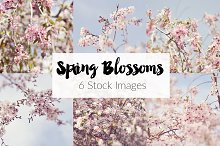 ON SALE! Spring Blossoms 6 Images