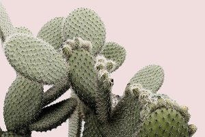 Cactus on Blush Pink Background