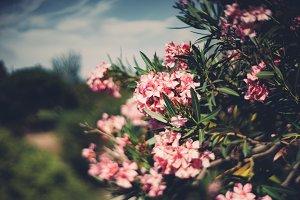 Tilt-shift shooting of pink flowers
