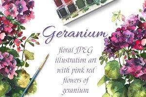 Watercolor geranium pelargonium