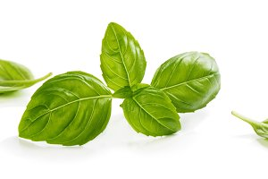 Green leaves of basil