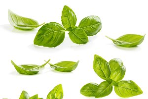 Collection leaves of basil