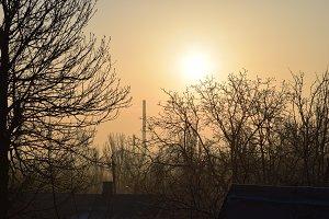 The dawn the sun the trees