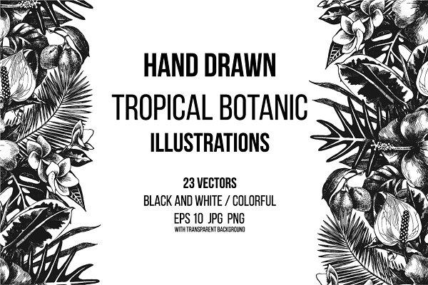 Tropical botanic illustrations