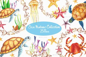 Underwaters sea seashells clipart