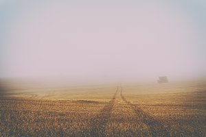 Endless Harvested Field in Fog