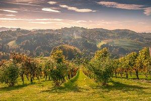 Wineyards / Hills