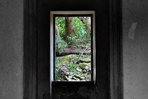 Window View Nature