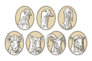 Farm animals set. Pig, cow, sheep, chicken, goose , turkey heads