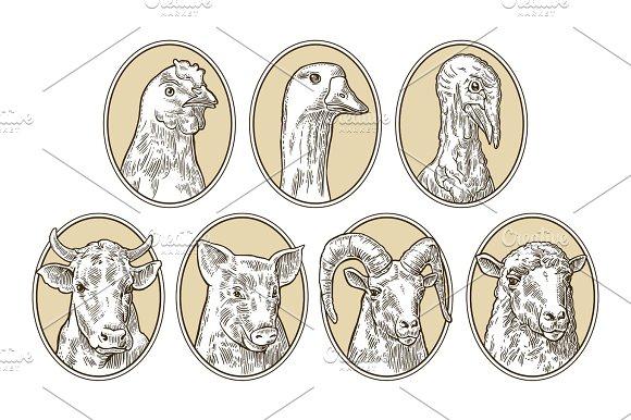 Farm Animals Set Pig Cow Sheep Chicken Goose Turkey Heads