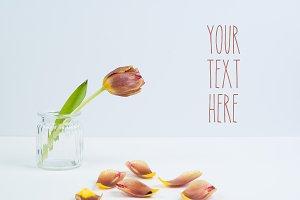 Rust Colored Tulip & Petals