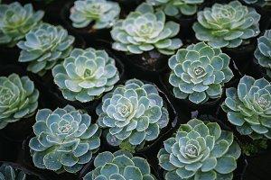 Rustic macro shot of cactus