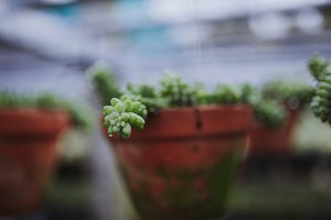 Succulent plant with water drops