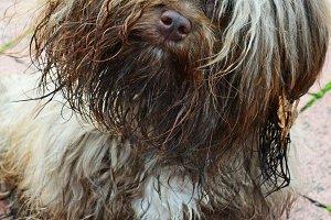Small muddy dog