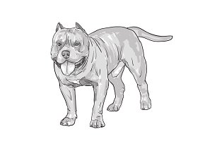 Drawing of pitbull dog