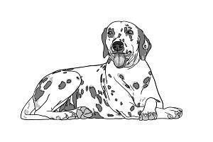 Drawing dalmatian dog on white