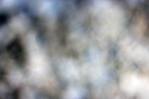 Macro Photography&Stock Gradient Pic