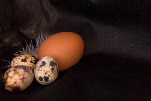 Quail eggs and chicken on a black background.