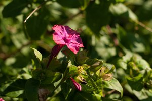 Pink Flower on Green