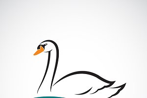 Vector of swan on white background.