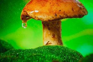 fresh brown cap boletus mushroom on moss in the rain