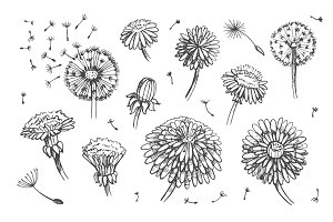 Dandelions: set + patterns