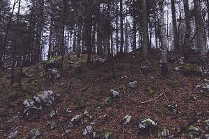 Dark and Mystic Forest with VSCO