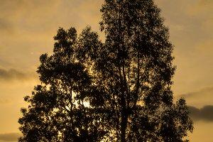 Portrait - Tree at Sunset